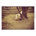 Tarjeta de felicitación del cerdo del Sleepyhead v