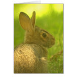 Tarjeta de felicitación del conejo de conejito