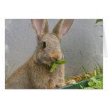 Tarjeta de felicitación del conejo de conejo de ra