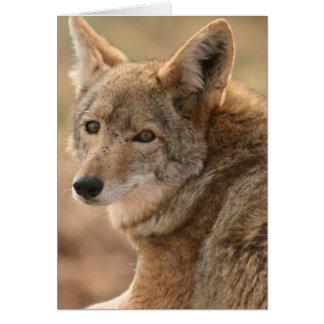 Tarjeta de felicitación del coyote