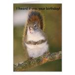 Tarjeta de felicitación del cumpleaños - ardilla