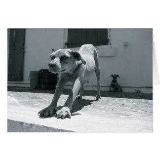 Tarjeta de felicitación del ~ del perro de Bahamas