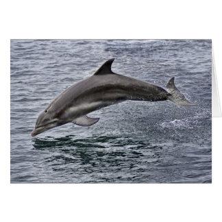 Tarjeta de felicitación del delfín