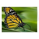 Tarjeta de felicitación del diseño de la mariposa
