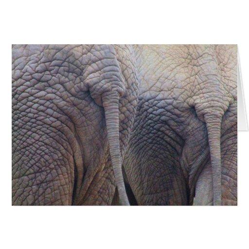 Tarjeta de felicitación del elefante