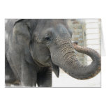 Tarjeta de felicitación del elefante el tocar la t
