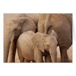Tarjeta de felicitación del elefante - espacio en