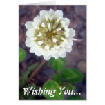 Tarjeta de felicitación del flor 1 del trébol blan