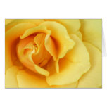 Tarjeta de felicitación del flor del rosa amarillo