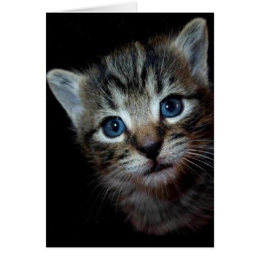 Tarjeta de felicitación del gatito del Tabby