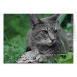Tarjeta de felicitación del gato de los ojos verde