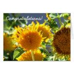 Tarjeta de felicitación del girasol de la enhorabu