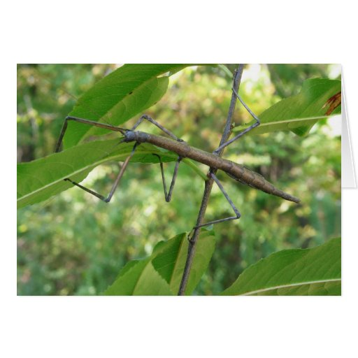 Tarjeta de felicitación del insecto del bastón