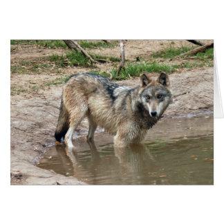 Tarjeta de felicitación del lobo de los lobos o ta