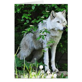 Tarjeta de felicitación del lobo gris
