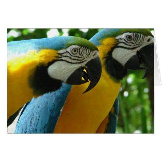 Tarjeta de felicitación del Macaw del azul y del o