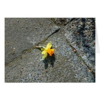 Tarjeta de felicitación del narciso
