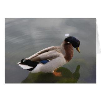 Tarjeta de felicitación del pato silvestre