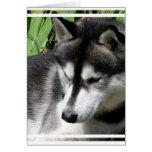 Tarjeta de felicitación del perfil del husky siber