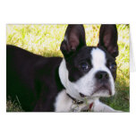 Tarjeta de felicitación del perrito de Boston Terr