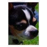 Tarjeta de felicitación del perrito de la chihuahu