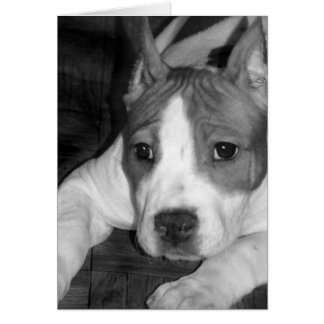 Tarjeta de felicitación del perrito de Pitbull