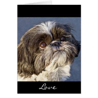 Tarjeta de felicitación del perrito de Shih Tzu -