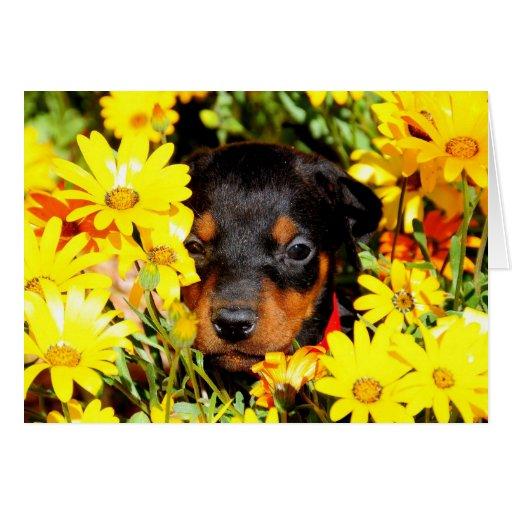 Tarjeta de felicitación del perrito del Doberman