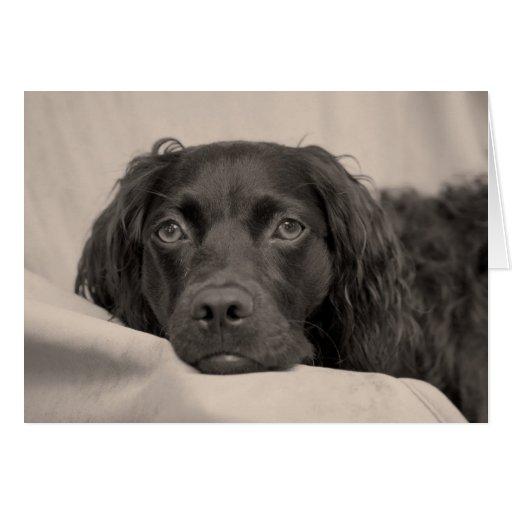 Tarjeta de felicitación del perro de aguas de Boyk