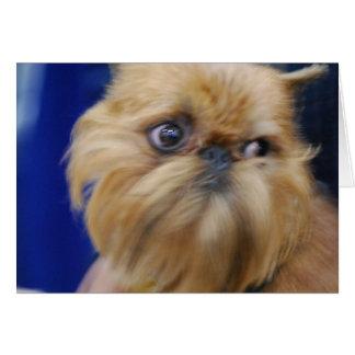 Tarjeta de felicitación del perro de Bruselas Grif