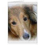 Tarjeta de felicitación del perro del collie