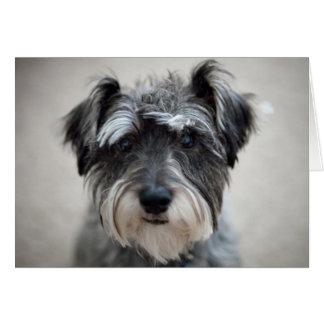 Tarjeta de felicitación del perro del Schnauzer