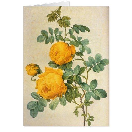 Tarjeta de felicitación del rosa amarillo del vint