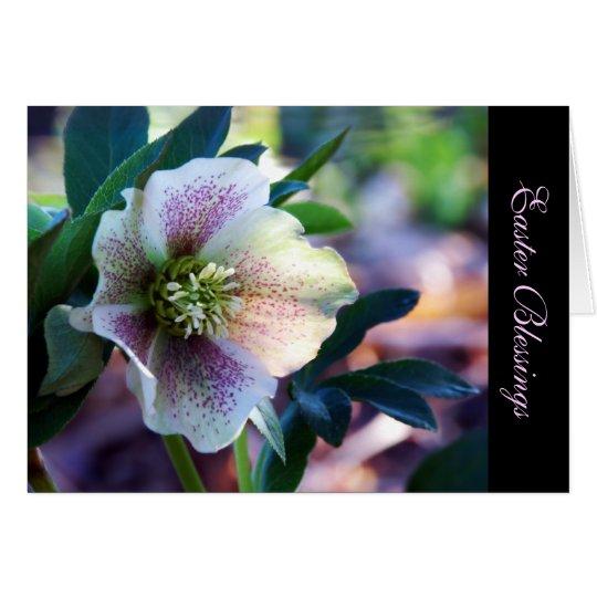 Tarjeta de felicitación del rosa cuaresmal del ~ d