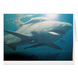 Tarjeta de felicitación del tiburón de Bull