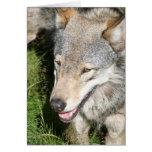 Tarjeta de felicitación del vagabundeo del lobo