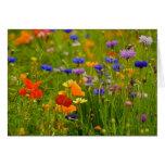 Tarjeta de felicitación del Wildflower