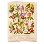 Tarjeta de felicitación del Wildflower del vintage