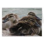 Tarjeta de felicitación Ducky del día