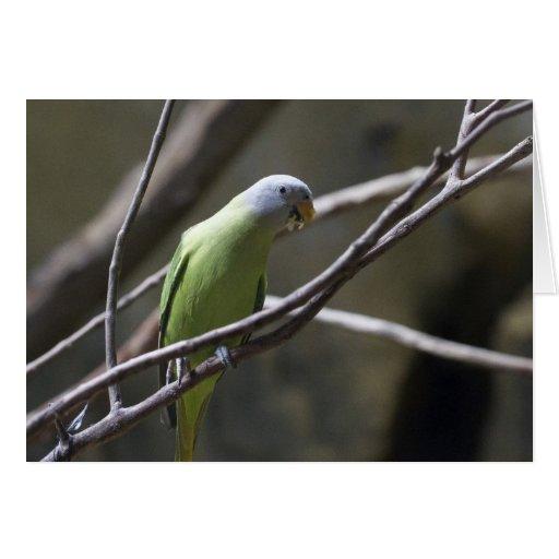 Tarjeta de felicitación en blanco del Parakeet