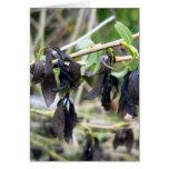 Tarjeta de felicitación ennegrecida de las hojas