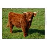 Tarjeta de felicitación escocesa del ganado de la