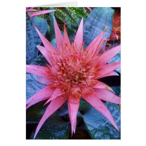 Tarjeta de felicitación exótica rosada de la