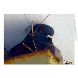 Tarjeta de felicitación femenina de la paloma 1