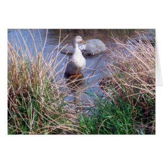 Tarjeta de felicitación femenina del pato del pato