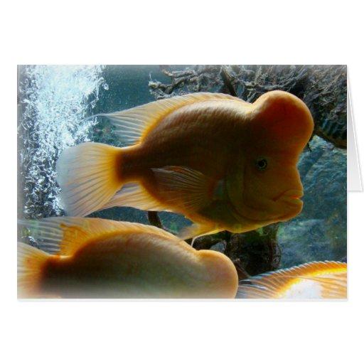 tarjeta de felicitación fish_empty