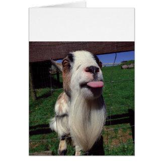Tarjeta de felicitación fresca de la cabra