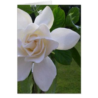 Tarjeta de felicitación - Gardenia naturalmente ma