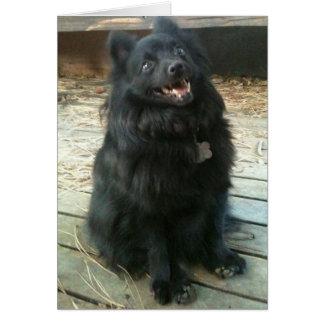Tarjeta de felicitación general del perro del Schi