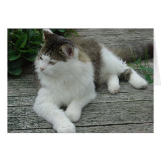 Tarjeta de felicitación - imagen 1 del gato de Coo